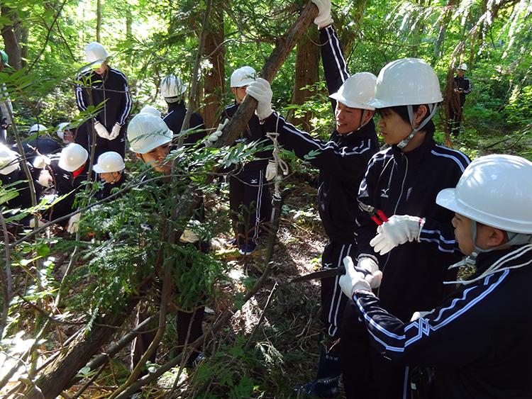 森林保全体験(白川郷)